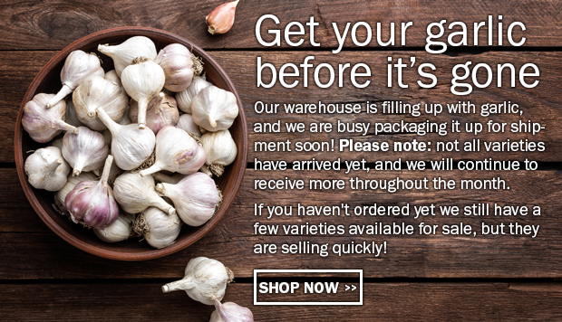 Get your garlic before it's gone! Our warehouse is filling up with garlic, and we are busy packaging it up for shipment soon! Please note: not all varieties have arrived yet, and we will continue to receive more throughout the month. If you haven't ordered yet we still have a few varieties available for sale, but they are selling quickly!